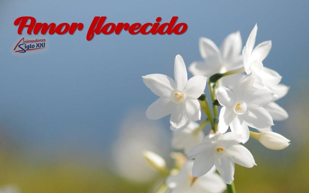 Amor florecido